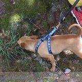 Dog Walker, Pet Sitter in Duluth