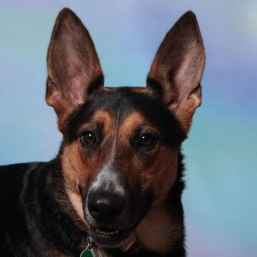 Pet Care Provider Sarah L Gallery Image 2