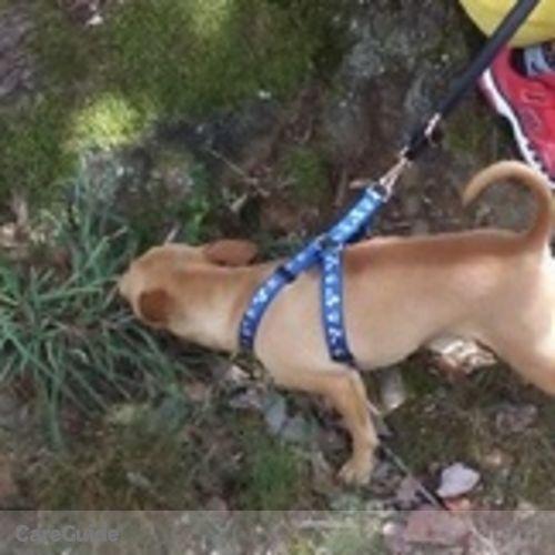 Pet Care Provider Armanda Tellez's Profile Picture