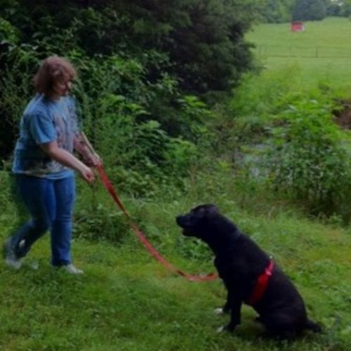 Pet Care Provider Christy M Gallery Image 1