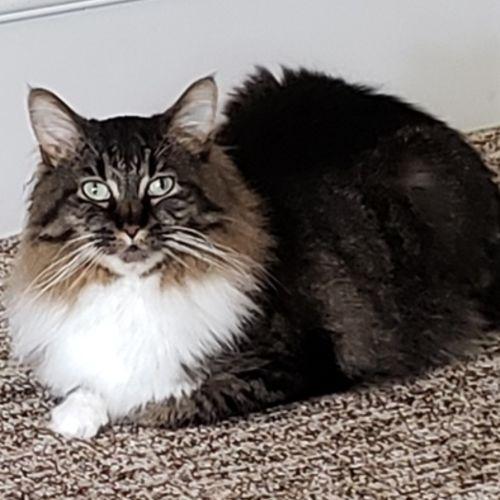 Pet Care Job Joy G's Profile Picture