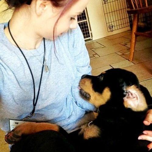 Pet Care Job Kai Passin Gallery Image 3