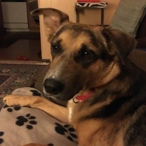 Pet Care Job Joyce B's Profile Picture