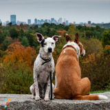 Pet Sitter in Boston