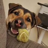 Dog Walker Job, Pet Sitter Job in Tucson