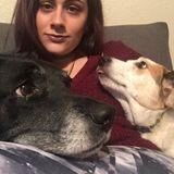 Dog Walker Job, Pet Sitter Job in Denton
