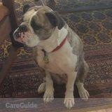 Dog Walker for Olde English Bulldogge