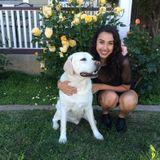 Available: Pet Sitter/Walker in Santa Clara, California