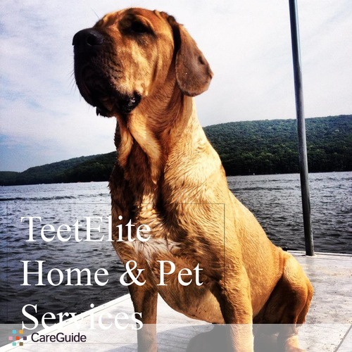 Pet Care Provider Matthew Teeters's Profile Picture
