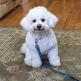 Dog Walker, Pet Sitter in Flushing
