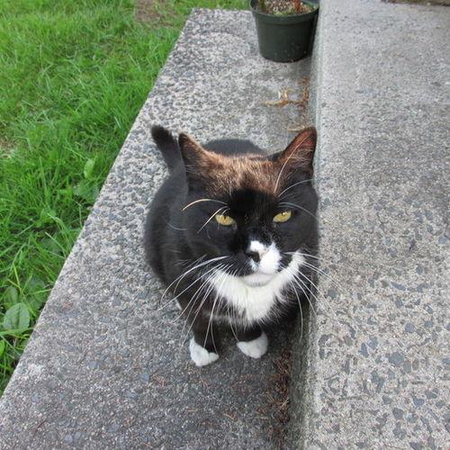 Pet Care Provider Kim Velez's Profile Picture