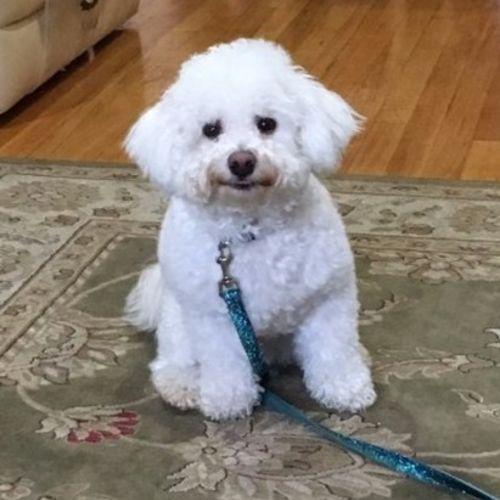 Pet Care Provider Tehila D.'s Profile Picture