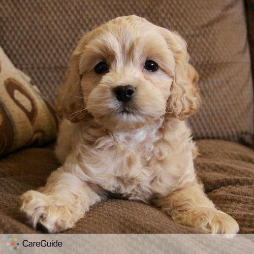 Pet Care Provider Yuliya Kaznacheyeva's Profile Picture
