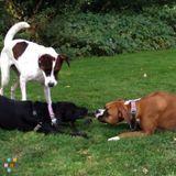 Dog Walker, Pet Sitter in Dedham