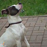 Dog Walker, Pet Sitter in Normal