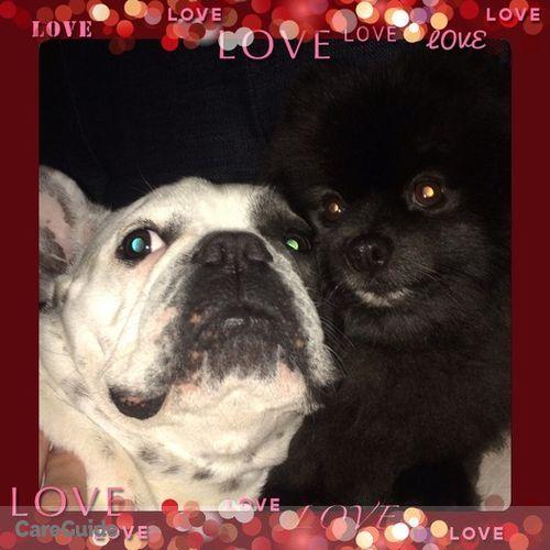 Pet Care Provider Jessica Lise's Profile Picture