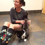 Petsitting and walking in Flagstaff