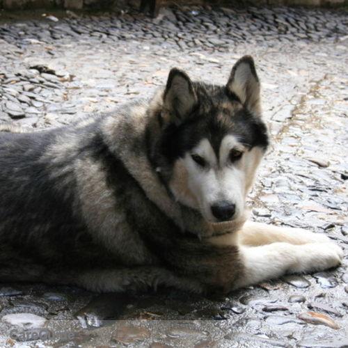 Pet Care Provider Sarah K's Profile Picture