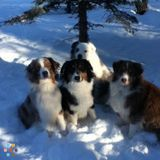 Dog Training/Walking services - Airdrie, AB