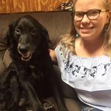Consistent Dog Walker- trying to save for college!