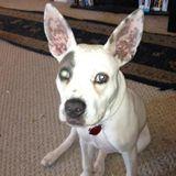 Available: Wonderful Pet Carer in Roseville, California