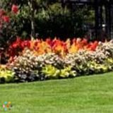 Landscaper Job in Wake Forest