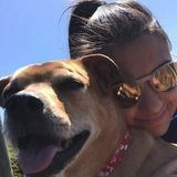Searching for Clover/Charlotte Dog Sitter Opportunity