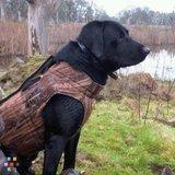Dog Boarding and hunting dog training