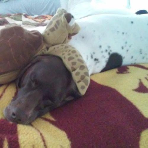 Pet Care Job Joe Gilar's Profile Picture