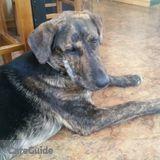Dog Walker, Pet Sitter in Anaconda