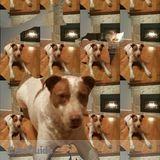 Dog Walker Job, Pet Sitter Job in North Vancouver