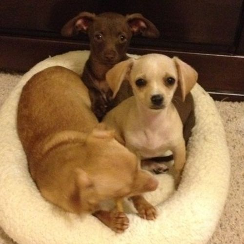 Pet Care Job Christy Nyhus's Profile Picture