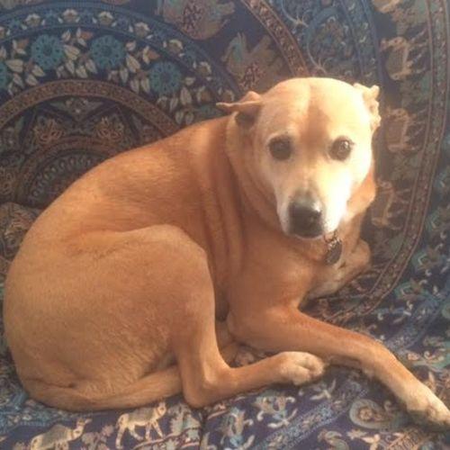 Pet Care Job Ron Buckmire's Profile Picture