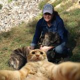 Good Dog & Cat Sitting Professional in Alliston, Essa, Barrie, Ontario and surrounding areas.