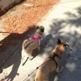 Dog Walker, Pet Sitter in Reseda
