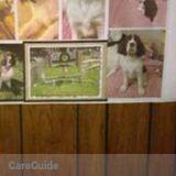 Dog Walker, Pet Sitter in Wallingford