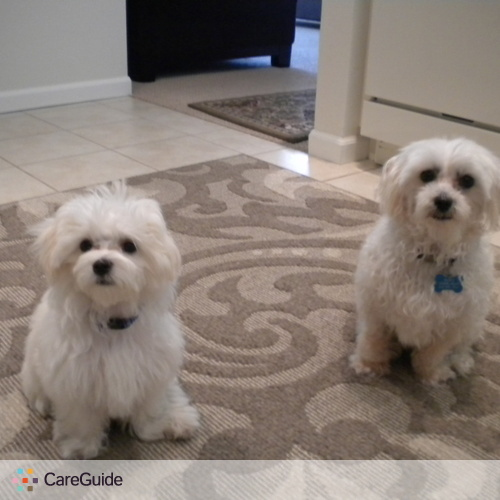 Pet Care Provider Kathleen Simon's Profile Picture