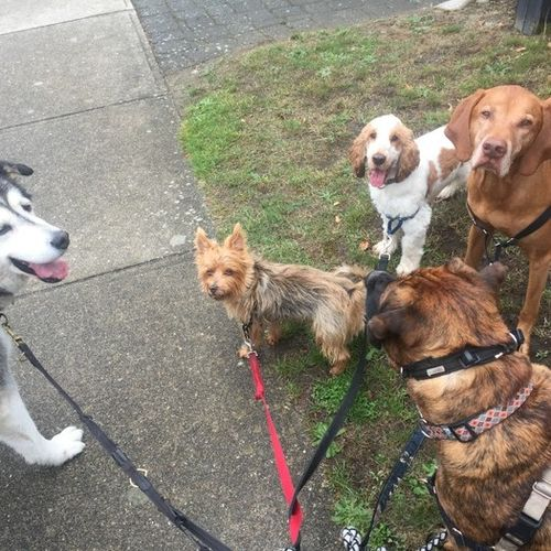Pet Care Provider Kelsey Queen of Paws Dog Walking Gallery Image 2