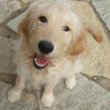 Excellent Pet Care Provider