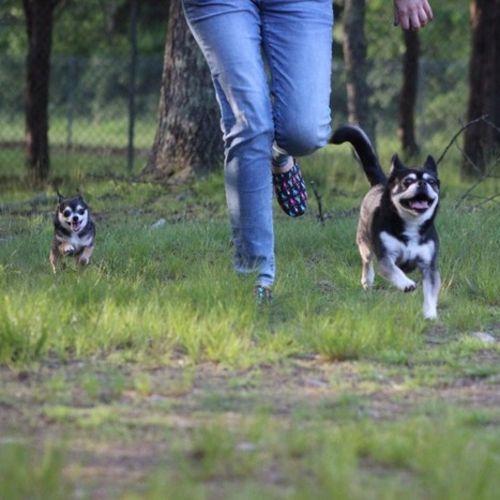 Pet Care Provider Natasha Lutz Gallery Image 1