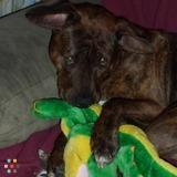 Dog Walker Job, Pet Sitter Job in Springfield