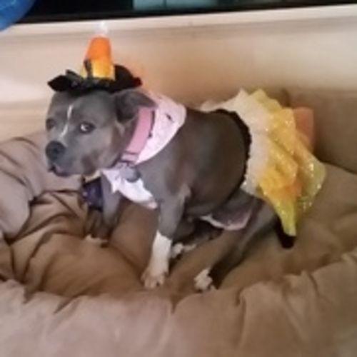 Pet Care Provider Sheri B's Profile Picture