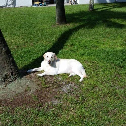 Pet Care Provider Sallie F Gallery Image 1