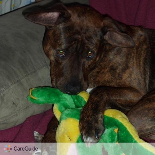 Pet Care Job Ashlee D's Profile Picture