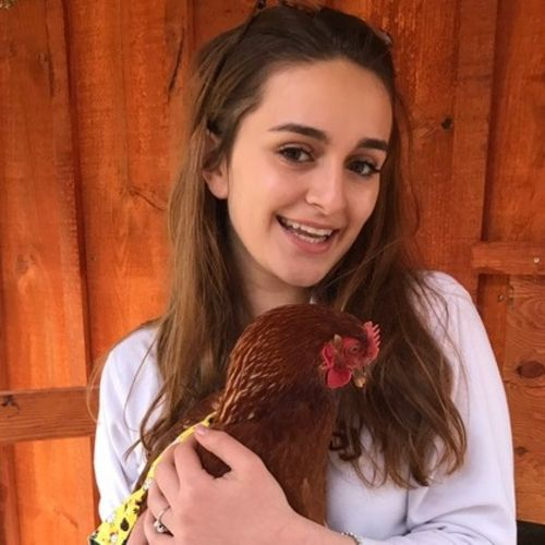 Pet Care Provider Noelle C's Profile Picture