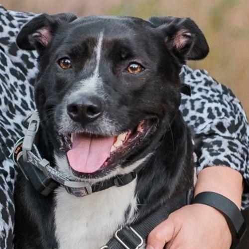Pet Care Job Gabrielle Cowgill's Profile Picture