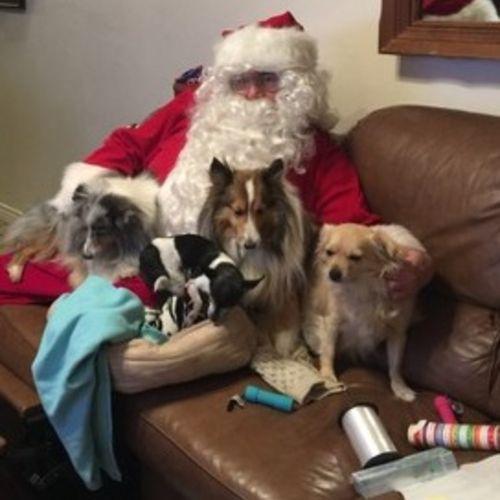 Pet Care Provider Steve W Gallery Image 2