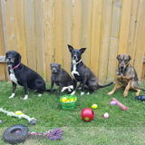 Pet Sitter in Katy