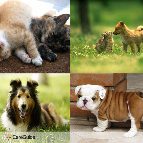 Pet Care Provider Assurance House and Pet Sitting's Profile Picture