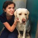Dog Walker, Pet Sitter in Port Charlotte